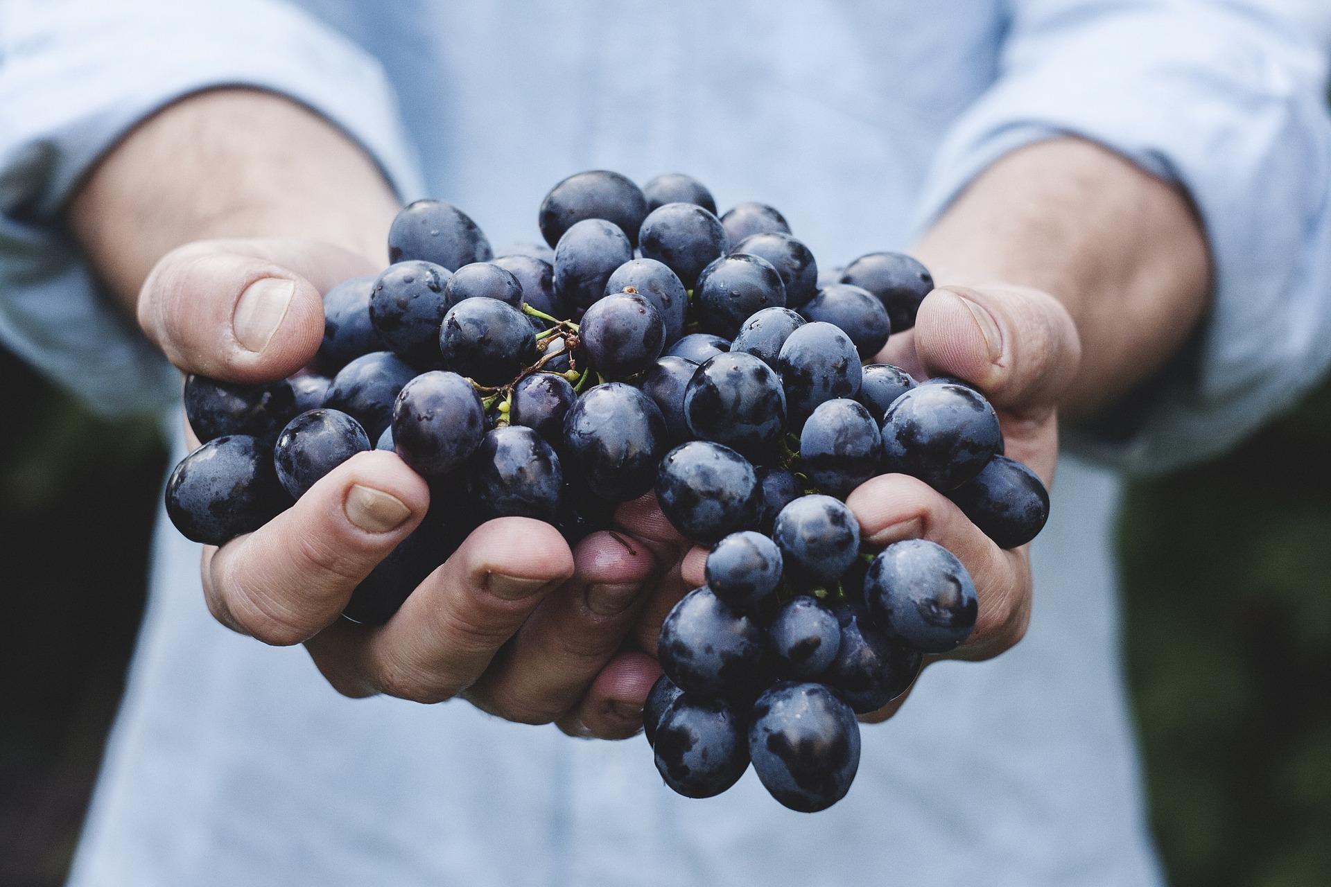 variedades de uva tinta